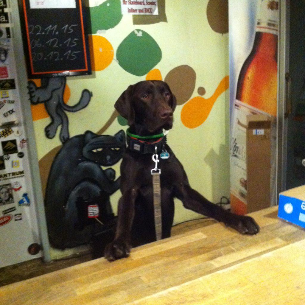 Barnaby, der Hund von John Hunt in der Skatehalle Osnabrück